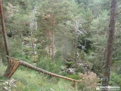 Tejos Rascafría-Valhondillo o Barondillo;chorro navafria el parrizal de beceite parque natural els